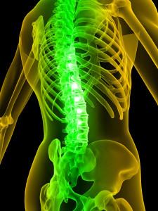 bigstock-Human-Spine-3039911